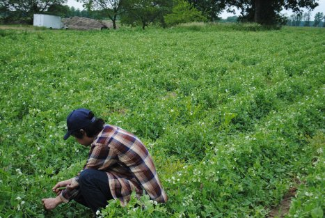 Members picking strawberries at Greig Farm