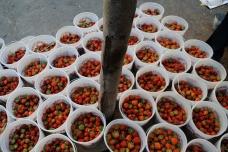 Greig Farm Share 2011