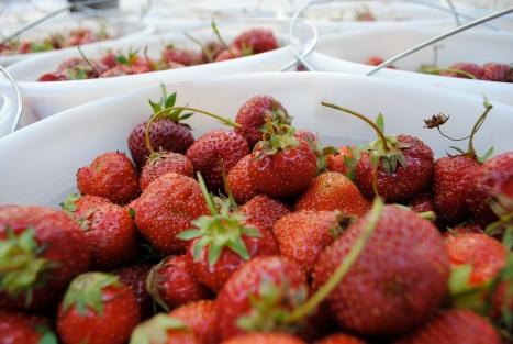 """Greig Farm """"Berry"""" Share 2011"""