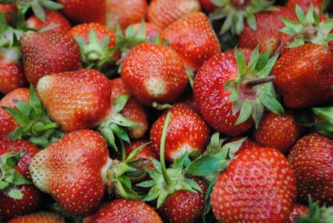 Greig Farm (Berry) Share