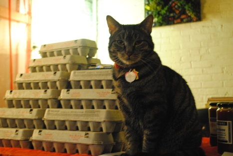Montrose guarding the eggs