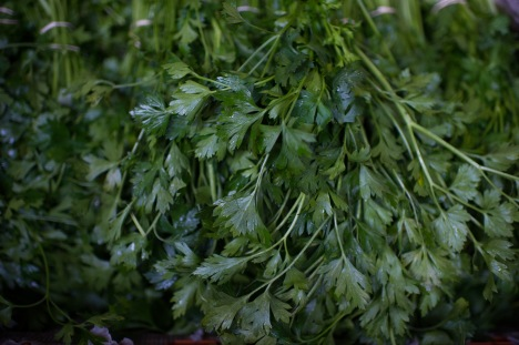 parsley pic by lauren slusher