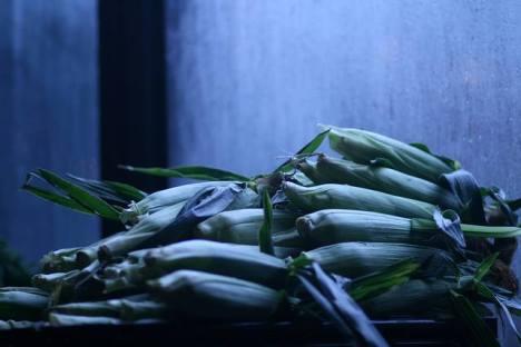 MimoMex Corn. Aug 2013