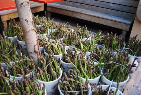 The Greig Farm Share starts with asparagus in May...