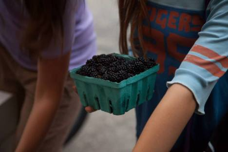 Greig Farm (Mostly) Berry Share