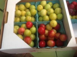 NY Orchard Share